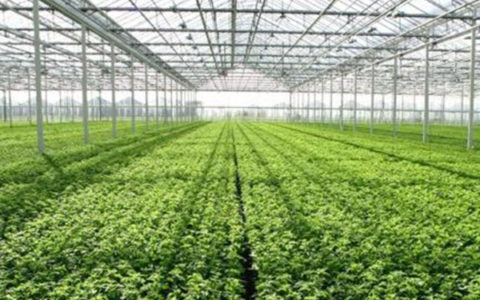 Crops grown in controlled humidity environments
