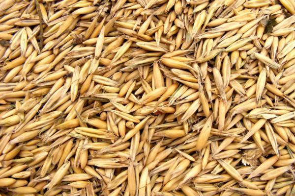 Lagerung von Samen