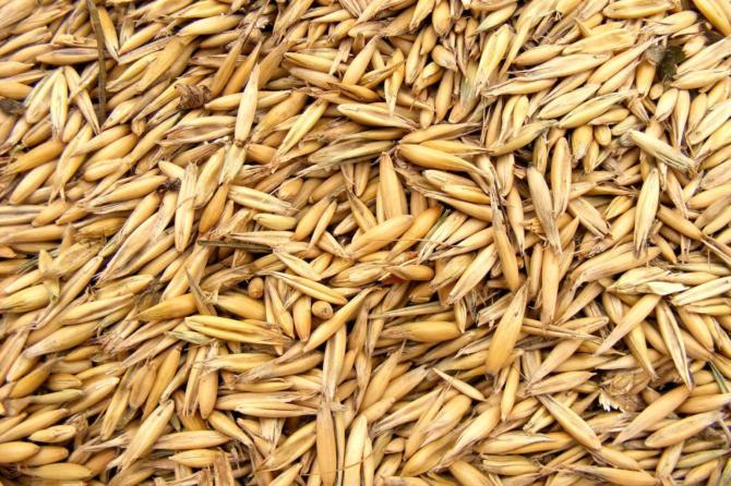 Control de Humedad en el almacenamiento y conservación de semillas