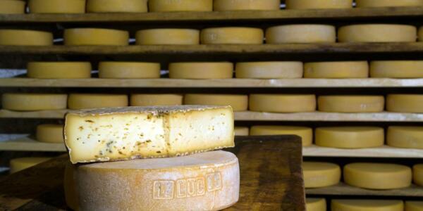 produccion-queso